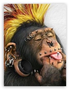 crazy_funky monkey